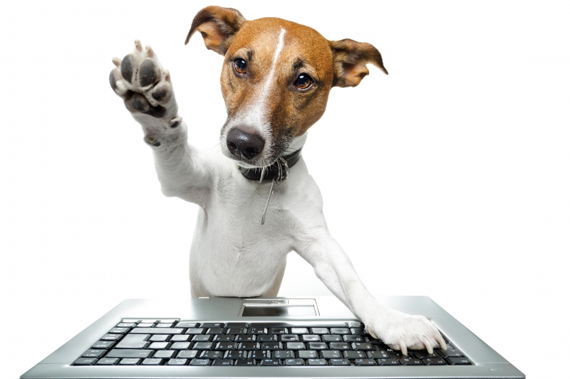 5485047-dog-computer-pc-tablet